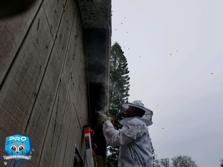 Bee Removal Tampa Locals Trust | Pro Wildlife Removal