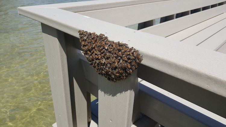 Expert in Removing All Types Of Tampa's Stinging Insects | Pro Wildlife Removal