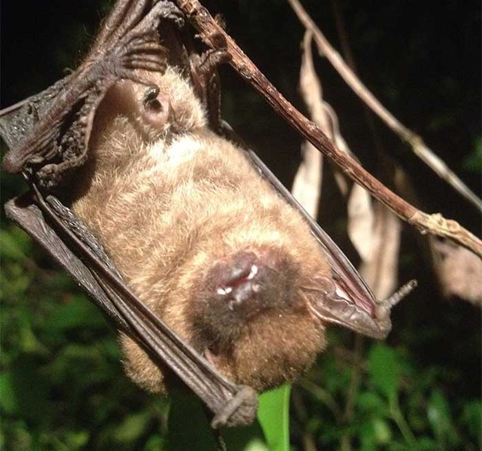 It's important to remove bats from your property due to the waste they accumulate | Pro Wildlife Removal