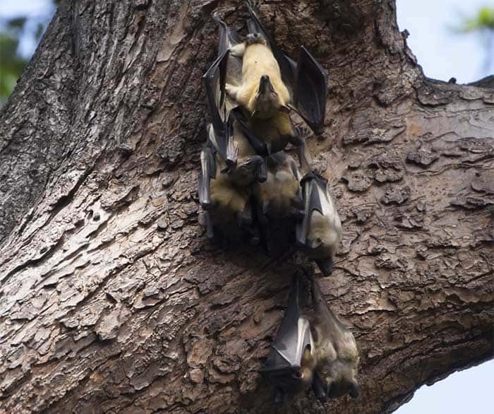 You can trust the licensed wildlife experts at Pro Wildlife Removal   Pro Wildlife Removal