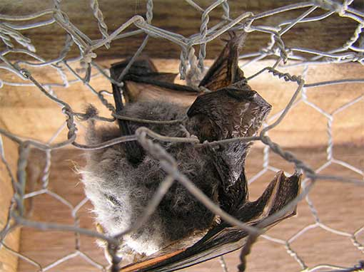 Odessa Bat Handlers | Pro Wildlife Removal