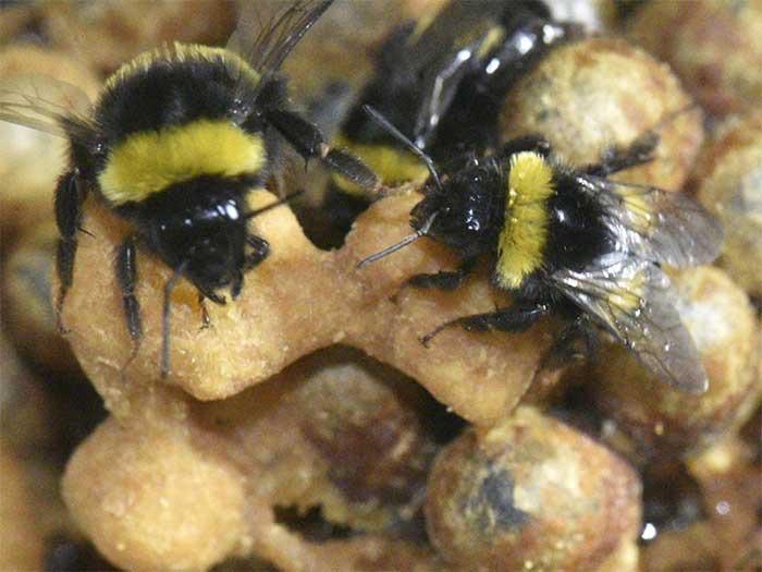 Odessa Bee Handlers | Pro Wildlife Removal