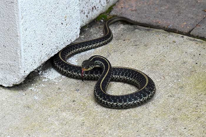 Snake Control | Pro Wildlife Removal