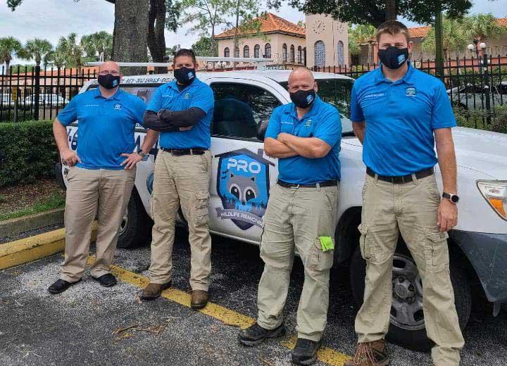 Pro Wildlife Removal Team | Pro Wildlife Removal