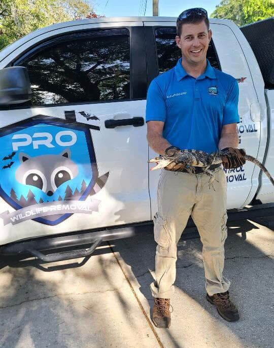 Prowildlife-removal-agent-holding-an-iguana