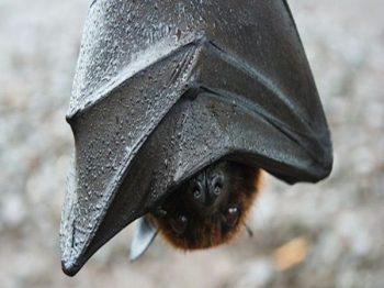 Bat Removal | Pro Wildlife Removal