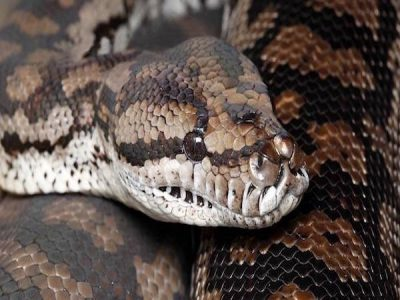 Snake Removal | Pro Wildlife Removal