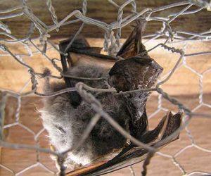 Trinity Bat Handling | Pro Wildlife Removal