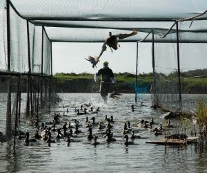 Trinity Duck Handling | Pro Wildlife Removal