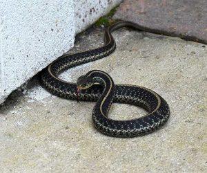 Trinity Snake Handling | Pro Wildlife Removal